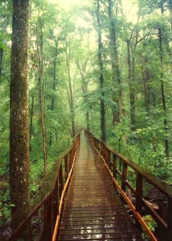 parque nacional de congaree